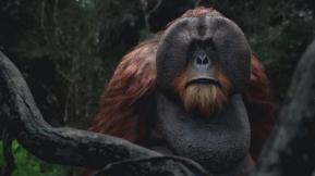 Orangutan_final_00