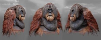 Orangutan_views